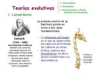 Evolución 3 Teorías Evolutivas Teoria Evolutiva Teoría Evolucion Biologica