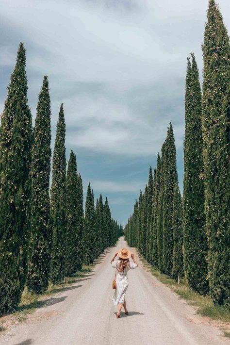 Italy Part 3: Tuscany and Florence   Ashton