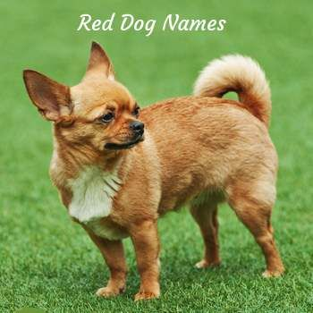 Unique Dog Names By Color Great Names Based On Hair Color Dog Names Puppy Names Dogs