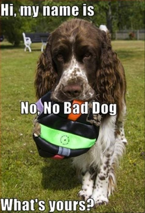 Dump A Day Attack Of The Funny Animals 27 Pics Dog Quotes