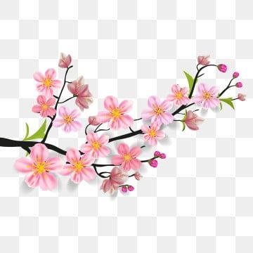 Watercolor Sakura Frame Background With Blossom Cherry Tree Branches Sakura Blossom Hand Drawn Png And Vector With Transparent Background For Free Download Cherry Blossom Art Cherry Blossom Cherry Blossom Flowers