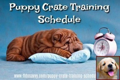 House Training A Puppy Reddit And Dog Training Prison Programs