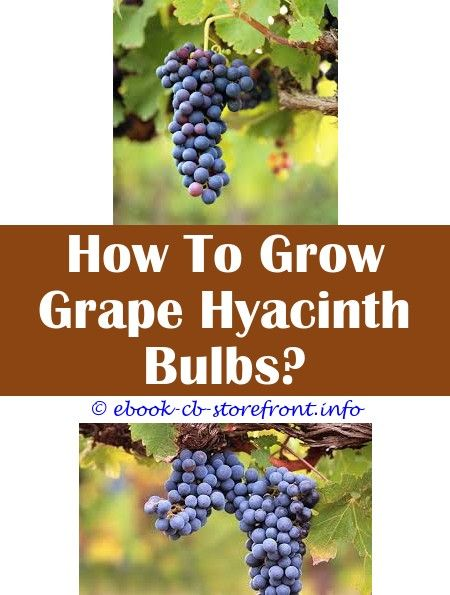 16 Extraordinary How To Grow Red Grapes From Seeds Admirable
