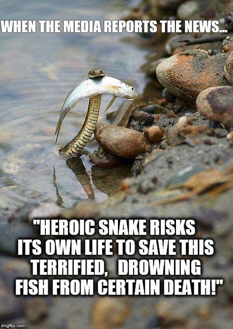 Meme Snake Fish Media Google Search Snek Your Best Friend Best Funny Pictures