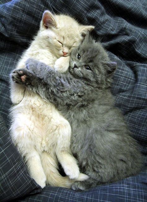 Best Friends Forever - Love Meow