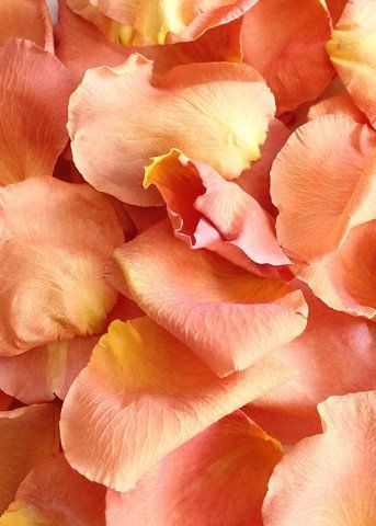 Beautiful freeze dried rose petals in peach are perfect for outdoor weddings. Great for indoors and outdoors, these pretty biodegradable rose petals in peach are perfect for scattering and tossing to