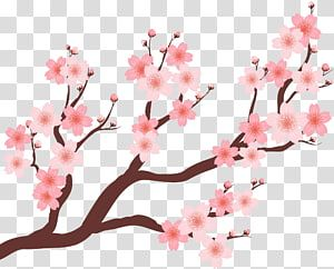 Cherry Blossom Plum Blossom Beautiful Cherry Tree Transparent Background Png Clipart Flower Illustration Cherry Blossom Drawing Cherry Blossom Watercolor