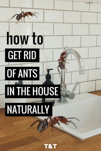 e8f41b3de65dff69339dbf986025f480 - How To Get Rid Of Ants Safely Around Pets