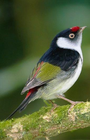 Trop Beau Avec Images Oiseaux Exotiques Petits Oiseaux