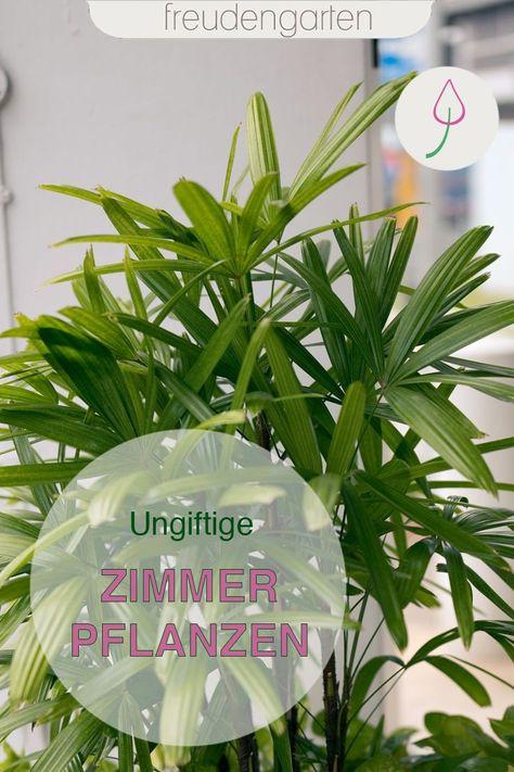 Ungiftige Zimmerpflanzen Ungiftige Zimmerpflanzen Pflanzen Zimmerpflanzen