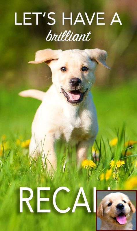 1 Have Dog Behavior Problems Learn About Potty Training A Great