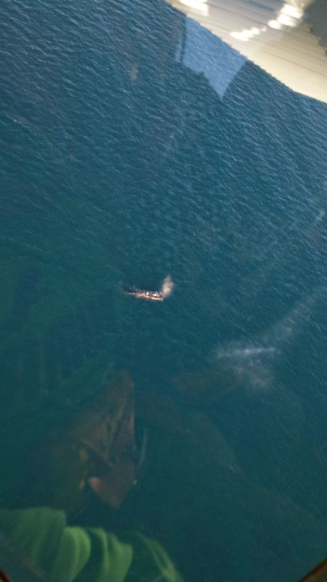 done this/my own photography---Whale Watching @ Kaikoura.. amazing view..