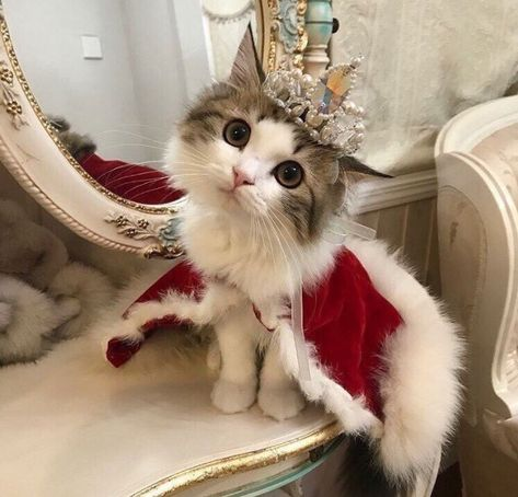 110 Cats in crowns ideas in 2021 | cats, cute animals, crazy cats