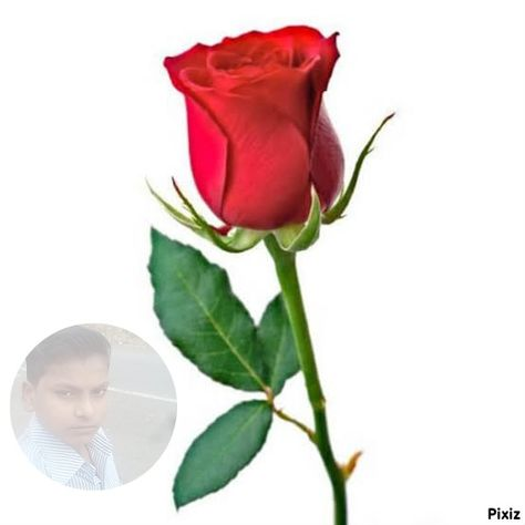 Pin By Kalpesh Rathwa On My Saves Rose Images Rose Images Hd Beautiful Red Roses Images
