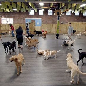 If You Want Flooring For Dogs That Can Stand Up To Their Paws Claws And Accidents You Ve Just Found It Find O Luxury Dog Kennels Indoor Dog Park Luxury Dog