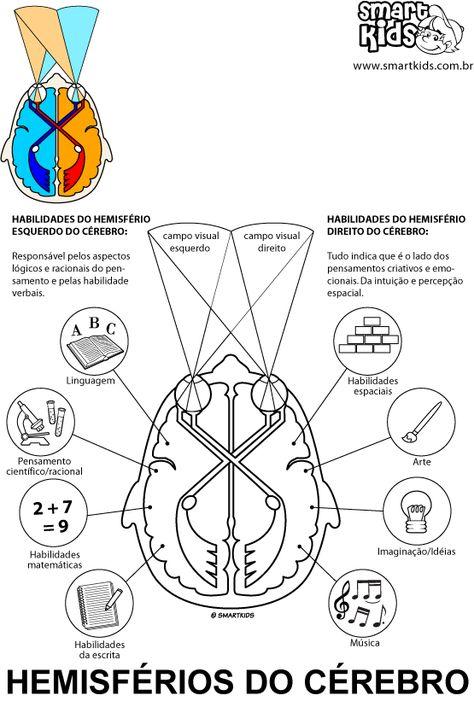 Colorir Desenho Hemisférios Do Cérebro Cadernos