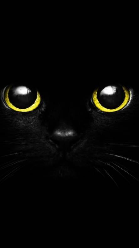 Cute Black Cat Eye Cat Background Cute Black Wallpaper Cat Wallpaper