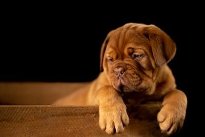 Puppies 40 Best Free Puppy Animal Dog And Pet Photos On