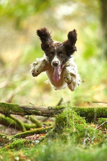 Gamekeeper Turned Photographer John Mactavish Captures Scotland S Beauty Cute Animals Dogs Dog Love