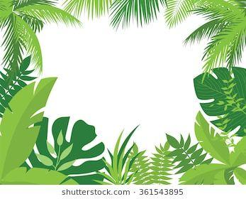 Jungle Border Images Stock Photos Vectors Shutterstock Palm Tree Drawing Tree Drawing Tree Drawing Wallpaper