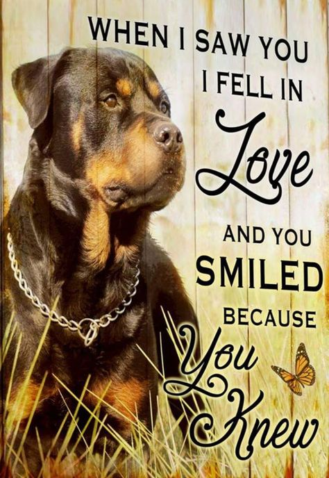 List Of Pinterest A Boy And His Dog Quotes Best Friends Puppys