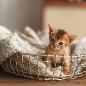 猫との暮らし大百科