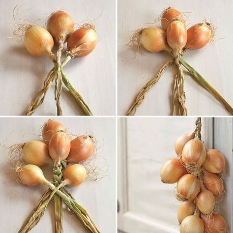 Why You Should Braid Your Onions Like a Pioneer Woman — Tips from The Kitchn Maybe cuz it looks so cool? Homestead Gardens, Farm Gardens, Homestead Farm, Organic Gardening, Gardening Tips, Veg Garden, Vegetable Gardening, Vegetables Garden, Edible Garden