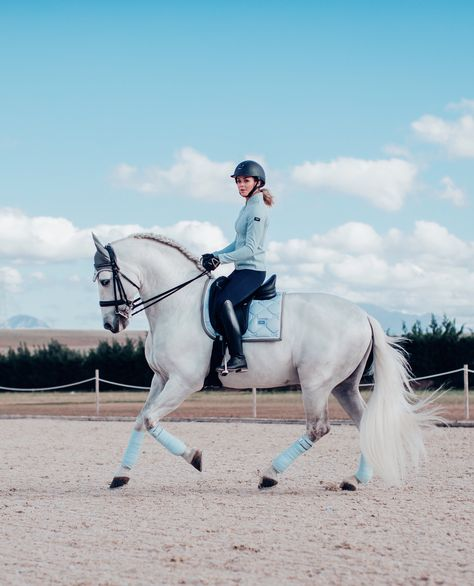Ice blue - Gorgeus Ice blue is now back in stock😍 Shopping for The Proper Horses Cute Horses, Pretty Horses, Horse Love, Horse Girl, Beautiful Horses, Horse Photos, Horse Pictures, Equestrian Outfits, Equestrian Style
