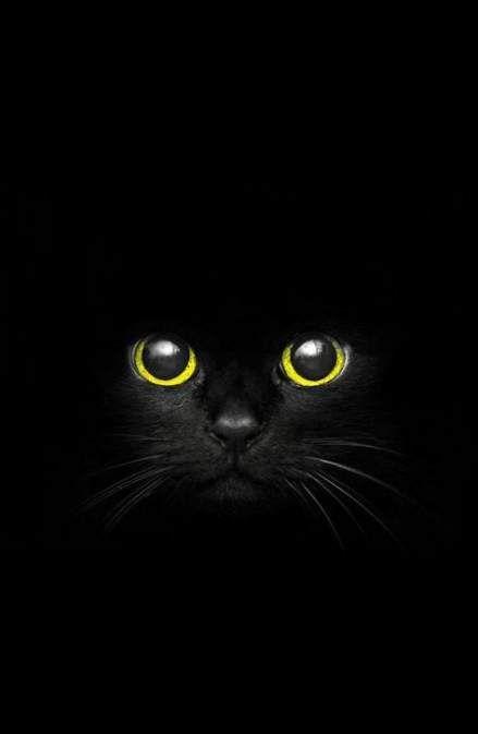 Super Cats Face Wallpaper Ideas Black Cat Art Cat Photography Super Cat