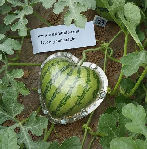Heart Shape Watermelon Molds For Sale Free Shipping Fruit