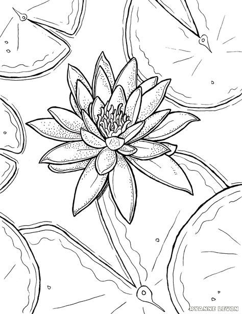 30 Trendy Wood Burning Ideas Free Printable Pictures Flower Coloring Pages Lilies Drawing Flower Drawing
