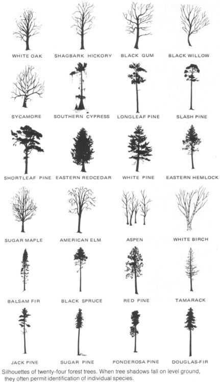 General silhouettes of trees.  Canada