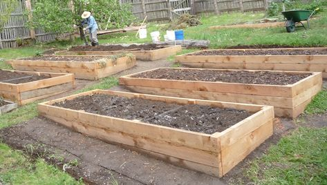 Raised Beds: Soil Depth Requirements