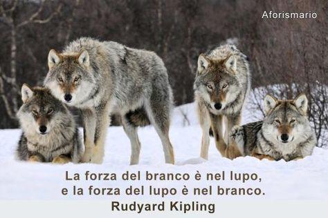 Risultati Immagini Per Rudyard Kipling Frasi Animali
