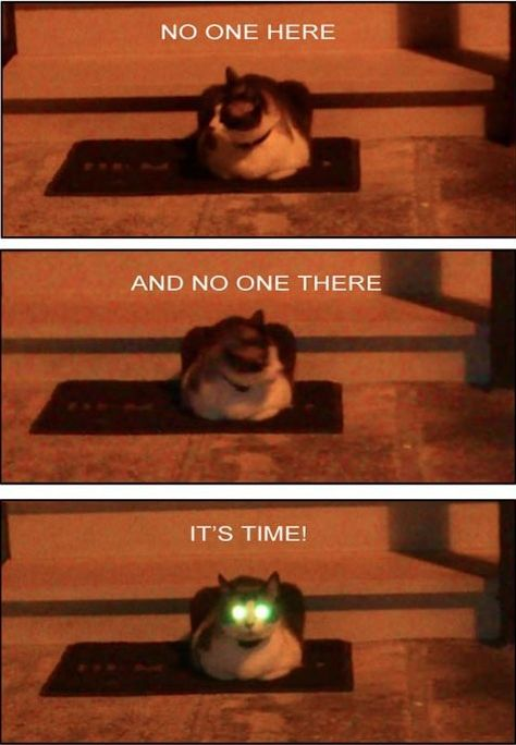 Funny cat pic...