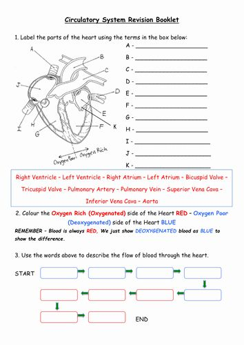 Pin By Brookes Kennedy On Science Circulatory System Factoring Quadratics Circulatory System Activities