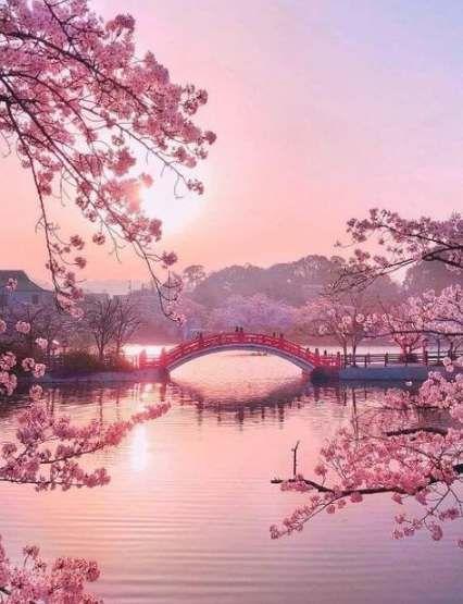 Super Sakura Tree Garden Pink Blossom Ideas Nature Photography Beautiful Nature Wallpaper Nature