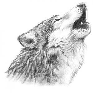 tatuaje de lobo aullando  Lobos 3  Pinterest  Tatuajes de lobo