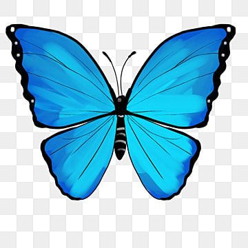 Ilustracao De Borboleta Azul Dos Desenhos Animados Insetos Clipart Desenho De Borboleta Borboleta Azul Imagem Png E Psd Para Download Gratuito Butterfly Illustration Cartoon Butterfly Butterfly Clip Art