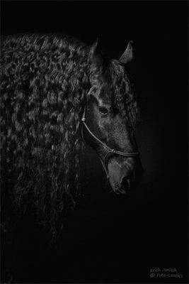 Friese Animals Beautiful Horse Love Friesian Horse