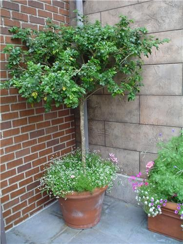 Captivating Patio Tree | The Great Outdoors | Pinterest | Patio Trees, Patio And Patios
