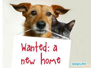 Adoptapet Com Blog Haustier Tiere Hundehaltung