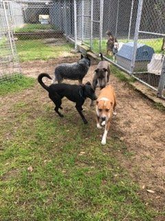 As Per The Manager Of A Dog Kennels Perth Only Occasionally People Used To Come To Adopt A Shelter Dog However Several Pet Ke Dog Kennel Kennel Boarding Dogs