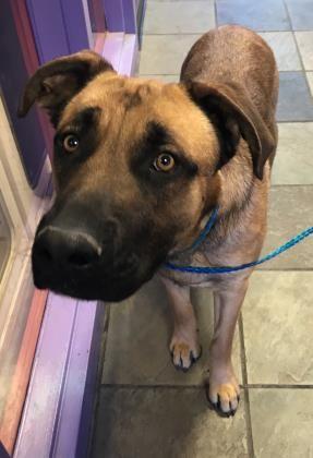 Pin On Save A Dog Make A Friend