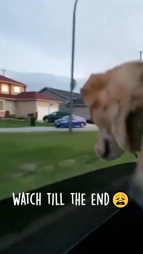 Poor Dog Lose His Love Of His Life🥺