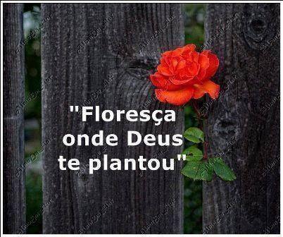 Floresça Onde Deus Te Plantou Frases Reflexão Frases E