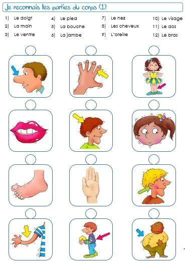 Jeu Corps Humain In 2020 French Flashcards French Worksheets French Lessons