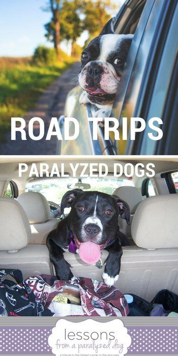 Tips For Taking A Successful Road Trip With A Paralyzed Dog