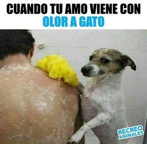 Te Borrare Su Aroma Aunque Tenga Que Tallarte Con Piedra Pomez Traicionero Celos Dogs Perros Amistad Jealous New Memes Funny Spanish Memes Memes