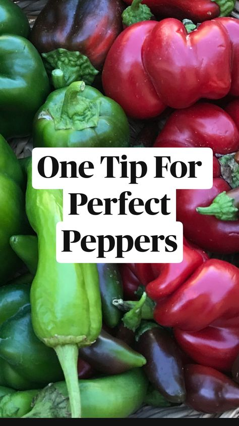 Free One Tip For   Perfect Peppers